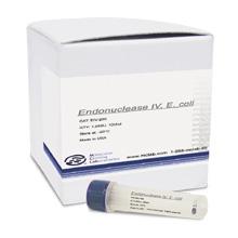 核酸内切酶 IV, 大肠杆菌