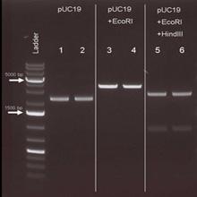Puramag™质粒 DNA纯化试剂盒